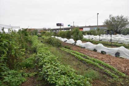 Novick Family Urban Farm